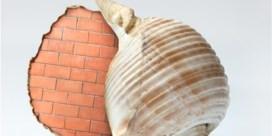 Filip Dujardin heeft een baksteen in zijn maag