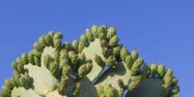Mijmeren over cactussen en zo