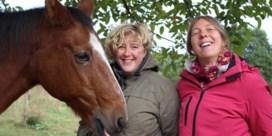 Geld voor gezondere paarden, jeugdlokalen en ambulances