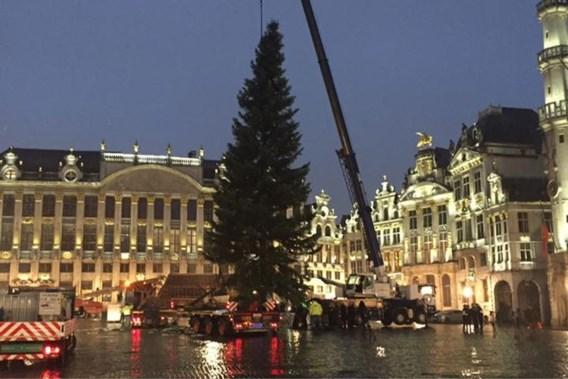 Enorme Slovaakse kerstboom siert Brusselse Grote Markt