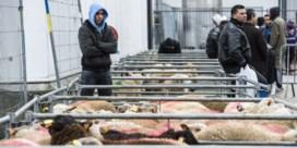 Brussels gewest organiseert geen slachtvloeren meer