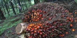 'Nog steeds kinderarbeid in palmoliesector'