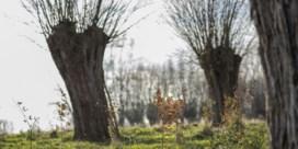 Meubelmaker plant bomen ter compensatie