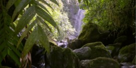 Zien: het regenwoud van Panama verkennen