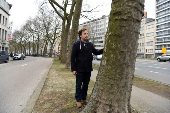 Tweede leven voor gekapte Antwerpse bomen