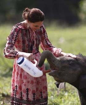 BBC onder vuur na ophefmakende documentaire over populair neushoornpark
