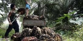 Antwerpse groep palmt Sumatra in