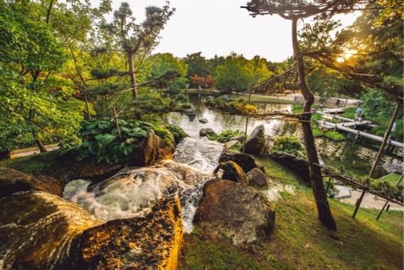 Feest in Hasselt: 'Japanse tuin heeft 25 jaar nodig om te volgroeien'
