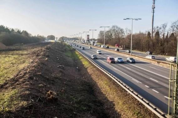 Daarom worden zo massaal veel bomen gekapt langs onze snelwegen