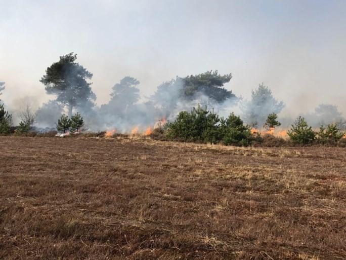 VIDEO. Grote brand op militair domein Schietveld: 60 hectare open vlakte in vlammen opgegaan