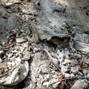 'Ik ijver voor een monument voor alle slachtoffers van asbest wereldwijd'
