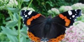 Vlinders zoeken massaal de eerste lentezon op