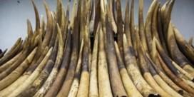 Hoe China de ivoorhandel een halt toeroept