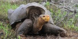 Galapagos is niet te stuiten