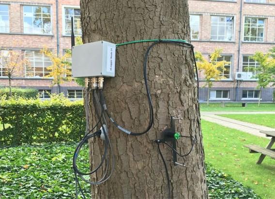 Ook Nederland heeft nu een twitterende boom