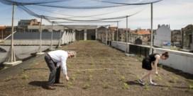 Bigh | Het is goed boeren op het stadsdak