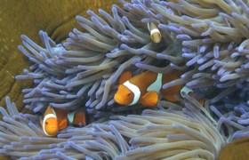 Grootste koraalrif ter wereld valt niet meer te redden