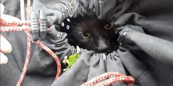 Nederlandse kat na vier dagen gered uit boom