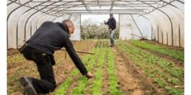 Landgenoten: bioboer zoekt en vindt grond