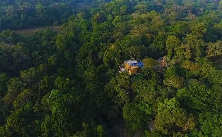 Koppel weigert toe te geven aan ontbossing en herplant regenwoud op eigen houtje
