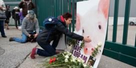 Animal rights met 175.000 handtekeningen naar Weyts