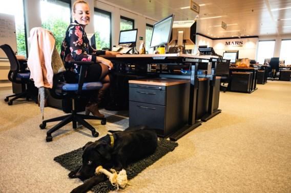 De voordelen van een huisdiervriendelijk kantoor