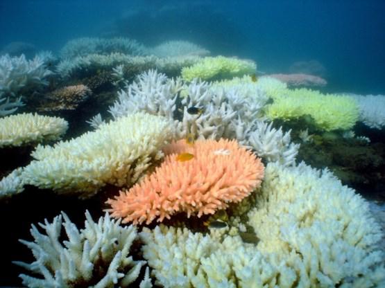 Unesco vindt speciaal statuut Great Barrier Reef niet nodig