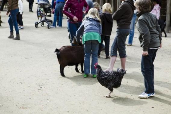Planckendael sluit kinderboerderij wegens 'te weinig respect voor dieren'