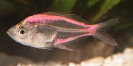 Fluovisjes lijden onder wanpraktijk