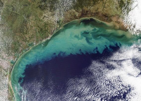 Dode zone in Golf van Mexico is grootste ooit