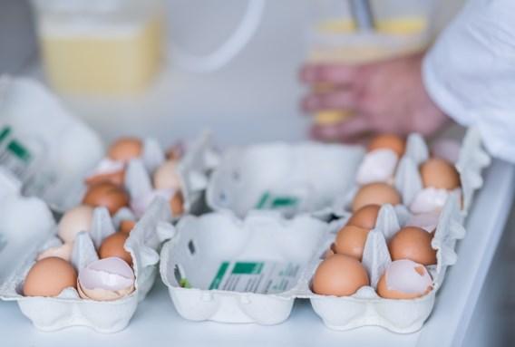 Eierprijs licht gestegen door fipronilcrisis
