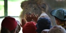 Is de zoo met uitsterven bedreigd?