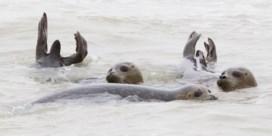 Sea Life nuanceert verhalen over agressieve zeehonden