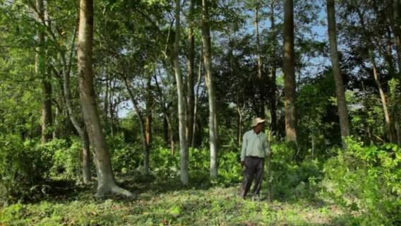 De man die een woud maakte