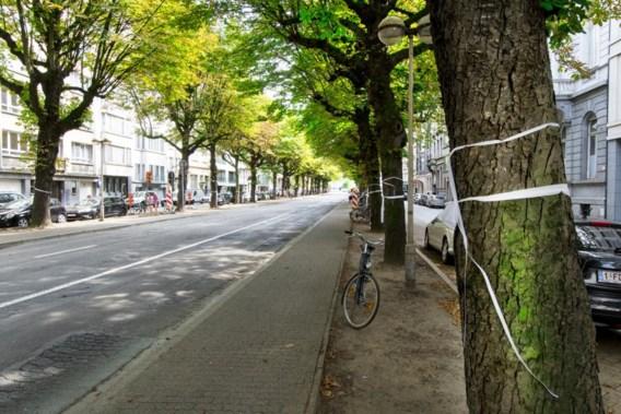'Alleen minder auto's maken de straat gezonder'
