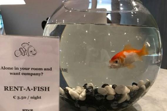 Hotel verhuurt vis voor eenzame gasten