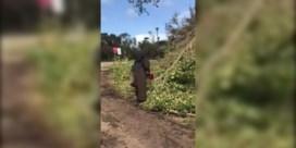 Non gaat omgewaaide bomen in Miami te lijf met kettingzaag en wordt internet-sensatie