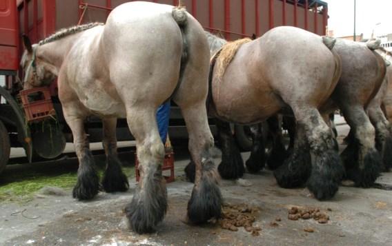 Weyts wil einde maken aan blokstaarten van paarden