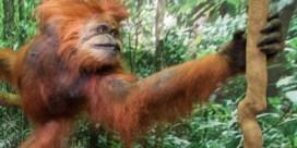 U benteen aap (en daar mag u trots op zijn)