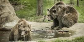 'Geen enkele dierentuin heeft tien op tien'