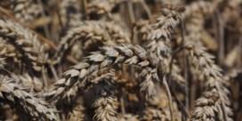 Landbouw in Polen en Baltische staten kreunt onder droogte
