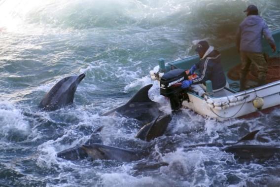 Belgische activiste in cel na verstoren dolfijnshow