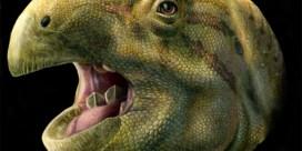 Dino met zelfscherpende tanden