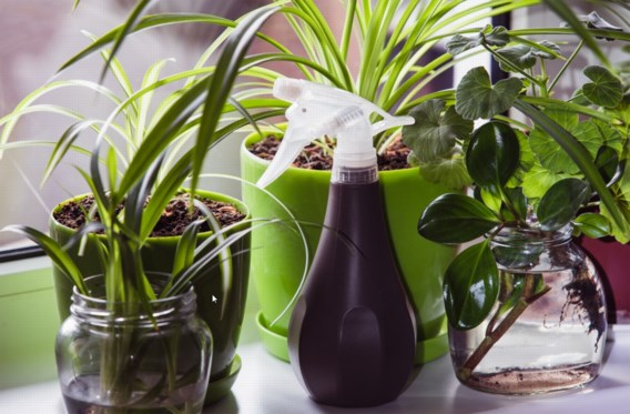 Overleven jouw planten de winter nooit? Met deze tips lukt het wel
