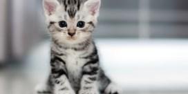 Waalse minister: 'Als je geen geld hebt, moet je ook geen kat nemen'
