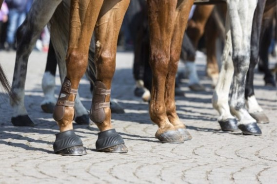 Politiepaard sterft tijdens Pegida-betoging in Nederland