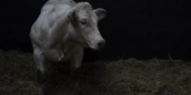 Antibiotica alleen als het echt moet, ook voor dieren