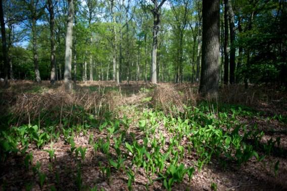 'Pervers: eerst bos kappen om daarna nieuw bos aan te planten'