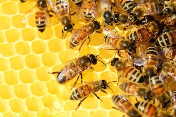 Bijen gaan luchtvervuiling opsporen in Brussel