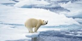 De klimaatopwarming relativeren? Dat doe je met ijsberen
